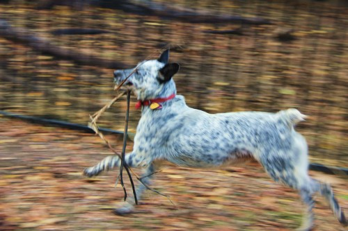 """Zoey: """" I've got the stick. They can't catch me now."""""""