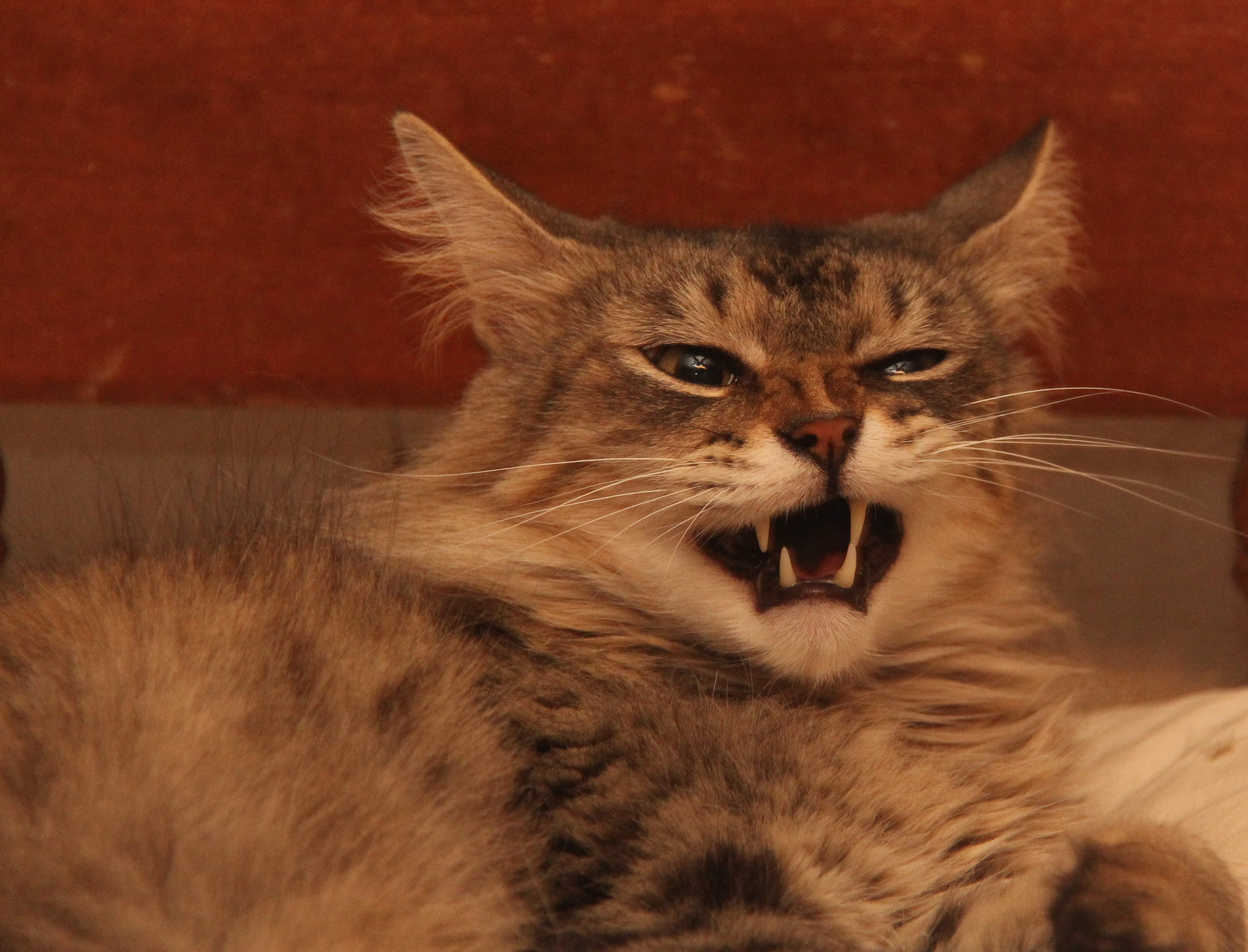 funny cat expressions | Pets, People and, Life