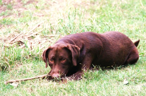Muddy loves sticks.  No inclination to fetch- anything!