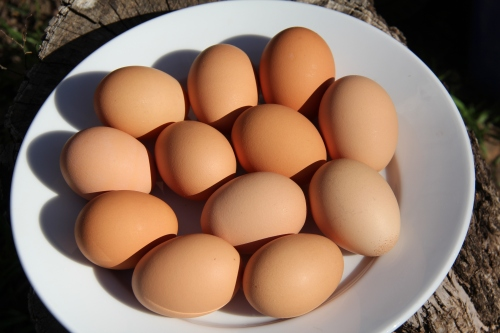 Brown eggs from pasture raised chickens